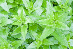 Green Foliage Stock Images
