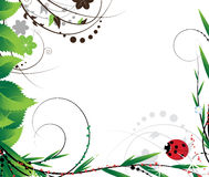 Green foliage and ladybug Stock Photo