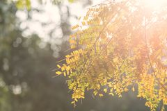 Green foliage leaf against orange morning sunrise with nature bokeh background and copy space for text. Natural abstract royalty free stock image