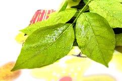 Green foliage leaves background Stock Image