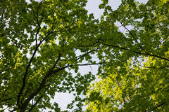 Green foliage leaves on the blue sky. S Stock Photos