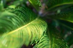 Green Foliage Royalty Free Stock Photos