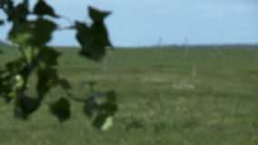 Green foliage and meadow stock video footage