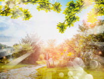 Green foliage over Country nature background with sun rays and bokeh. Summer countryside nature background Royalty Free Stock Photos