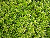 Green foliage pattern Stock Photography