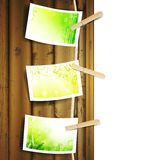 Green foliage photos pinned to a rope Royalty Free Stock Image