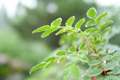Green Foliage Royalty Free Stock Image