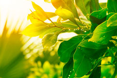 Green foliage after a rain in the sunny day Stock Photography