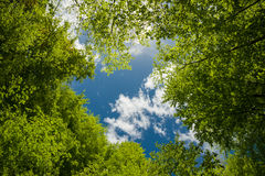 Green foliage and sky Stock Images