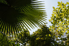Green foliage and sky in tropical forest Royalty Free Stock Image
