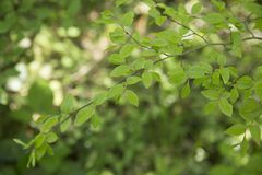 Green foliage on a spring day. royalty free stock photography