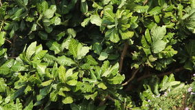 Green foliage sways in the wind stock footage
