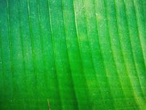 Green foliage texture design background. Fresh leaf close up background.Abstract leaf wallpaper stock images