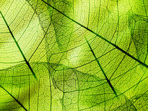 Green foliage texture Royalty Free Stock Photography