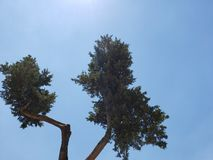 green foliage of trees and blue sky stock photos