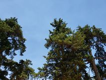 green foliage of trees and blue sky stock image