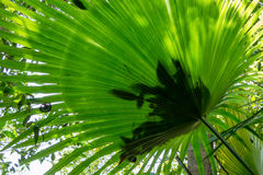 Green foliage in tropical forest Stock Image