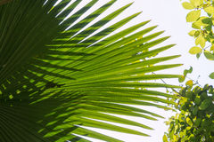 Green foliage in tropical forest Stock Photo