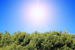 Green foliage under blue sky. Green foliage under the clear blue sunny sky Stock Photos