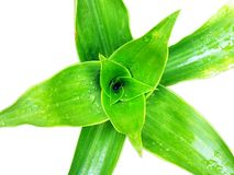 Green foliage and water drop Stock Photo