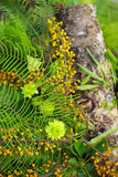 Green foliage and yellow berries. Fresh spring flower arrangement made of green foliage, green button chrysanthemum, yellow berries, fern and wood log Stock Photography