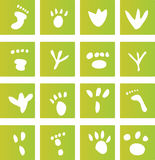 Green Foot Print Icons. A selection of green vector graphics representing different types of foot prints royalty free illustration