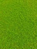 Green football field grass stock photography