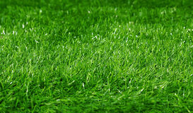Green football field grass background Stock Photos