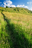 Green footpath in the meadow Royalty Free Stock Photo
