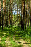 Green forest. Nature summer beautiful Royalty Free Stock Image