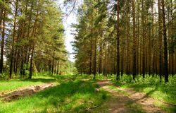 Green forest. Beautiful nature photo Stock Photo