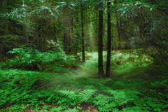 Green Forest. A late spring image of a green forest in the Pacific Northwest Stock Images