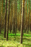 Green forest. Background with wild green forest Stock Photo