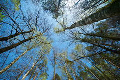 Green forest Royalty Free Stock Images