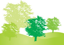 Green forest. Green spring forest trees in fresh green colors illustration Stock Image