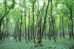 Green forest. Inside green forest in summer Stock Photo