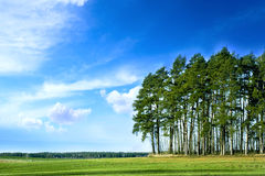 Green forest. On blue sky Royalty Free Stock Photos