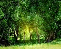 Green forest stock photos