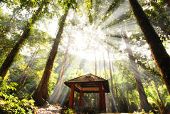 Green forest. With ray of lights beautiful photo stock photo