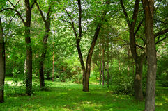 Green forest. Nature landscape: Green forest beautiful Stock Image