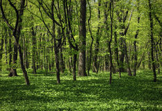 The green forest Stock Photo