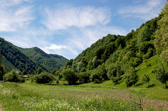 Green forest. Greem forest in Rila mountain Bulgaria Royalty Free Stock Images