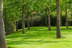 Green forest. A part of a green forest Stock Image