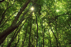 Green Forest. Tropical Green forest - rainforest with sun shining in the background stock photos