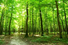 Green forest Stock Images