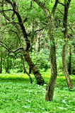 Green forest. (abstract green photo Stock Images