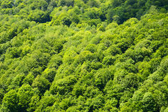 Green forest. Royalty Free Stock Photos