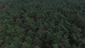 Green forest aerial top view stock footage