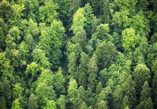 Green Forest, aerial view stock photo