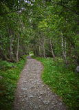 Green Forest Alley Stock Photo
